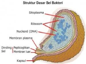 bakteri 2