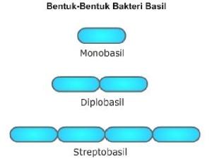 bakteri 6